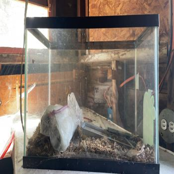 snake tank or fish tank