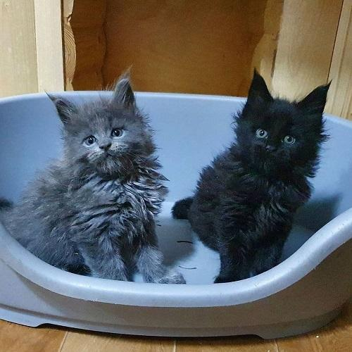 Charming Male and Female Available For Sale