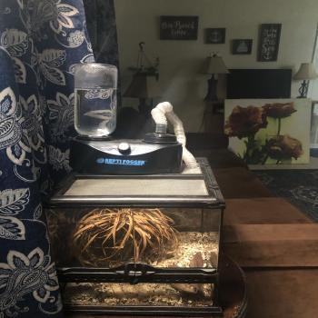 reptile setup humidifier light