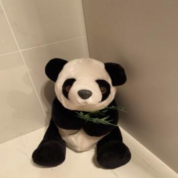 panda with bamboo plush toy
