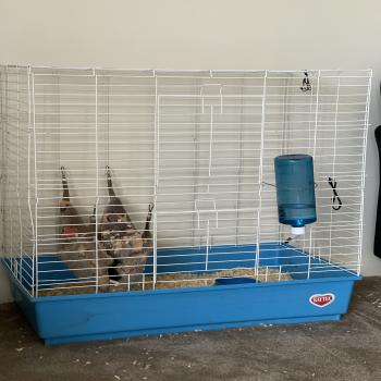 Ferret W/ Ferret Cage For Sale