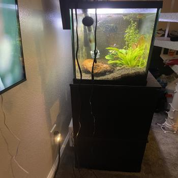 fish tank / cabinet/ filter