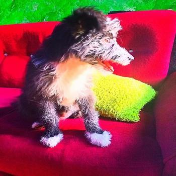 My Puppy Mikki